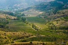 фотография виноградников в горной долине Крыма