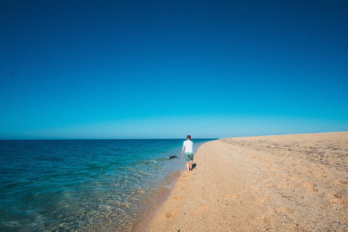 Бегом за дельфином по пляжу