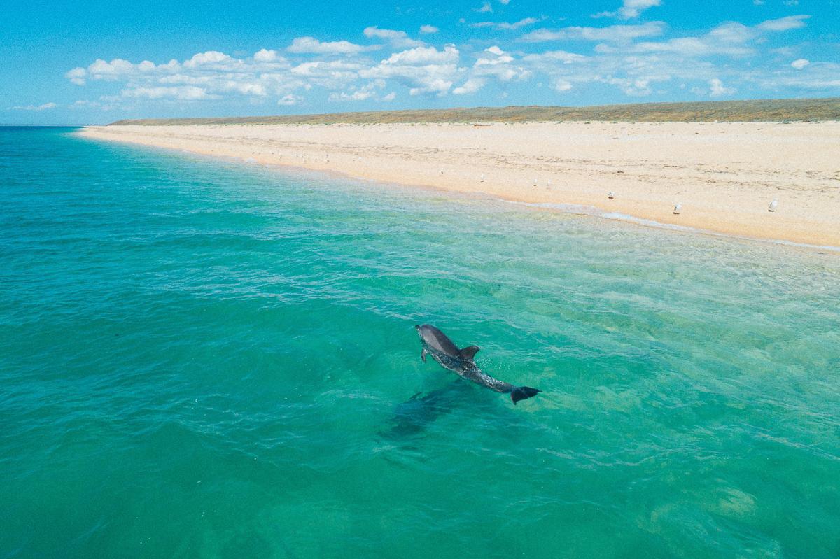 Дельфин в море фото